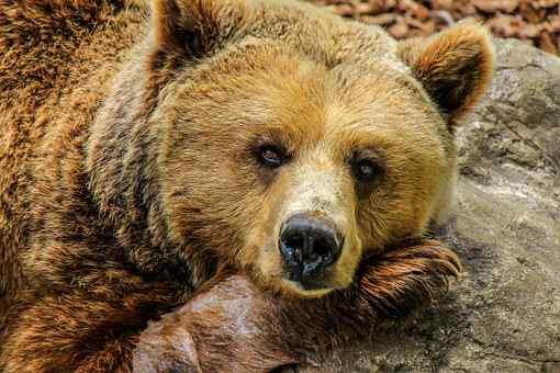 bear-838688__340.jpg
