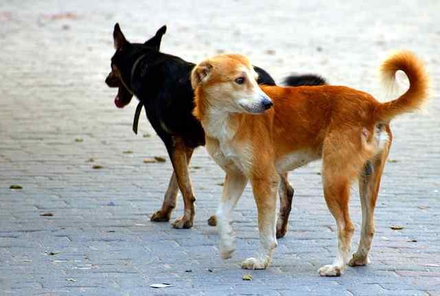 dogs-2848353_640.jpg